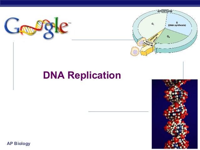 DNA Replication  AP Biology  2007-2008
