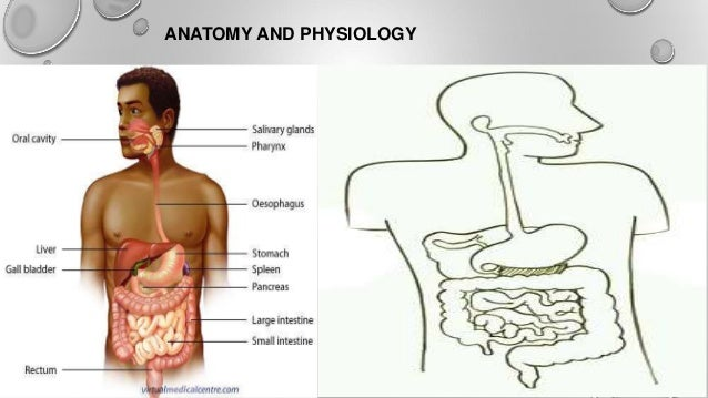 Old fashioned abdomen anatomy ppt ensign anatomy and physiology abdomen anatomy ppt 1336219 follow4morefo ccuart Image collections