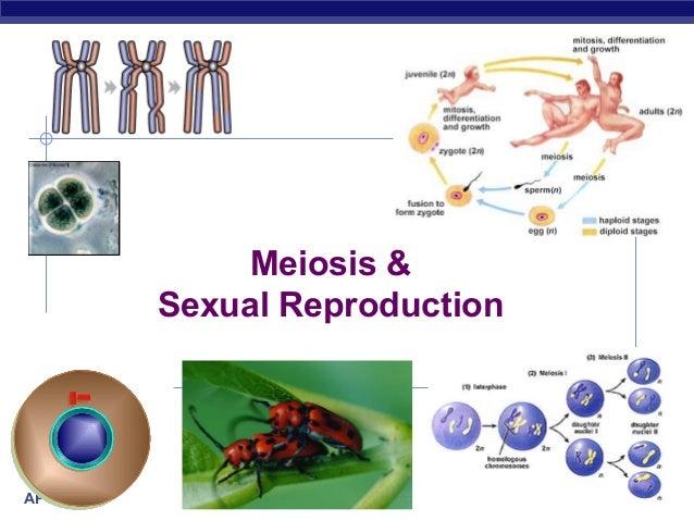 Meiosis & Sexual Reproduction  AP Biology  2007-2008