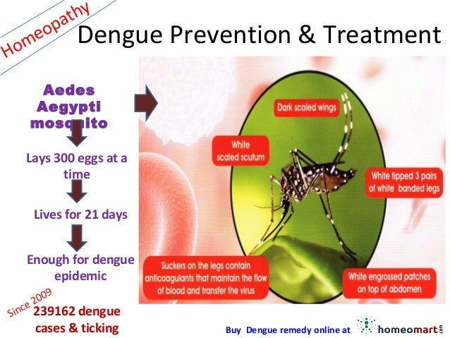 understand and prevent dengue Researchers have discovered a key step in how the dengue virus infects a cell the finding will allow researchers to study the process in the laboratory and provide a valuable tool for testing new drugs to prevent or treat infection the virus that causes dengue is transmitted by mosquitoes dengue.
