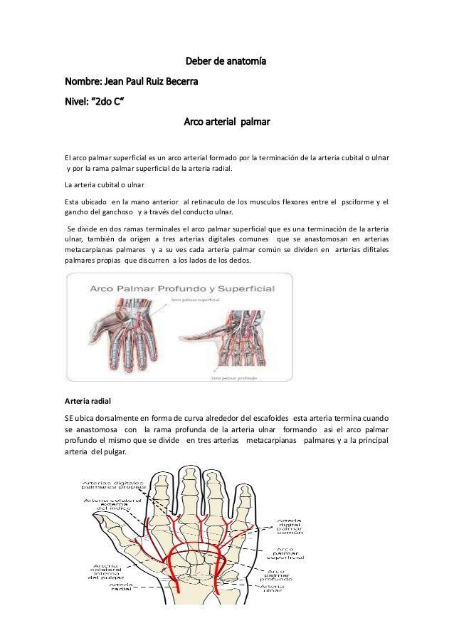 580028947) deber de anatomía arterias manos y pies