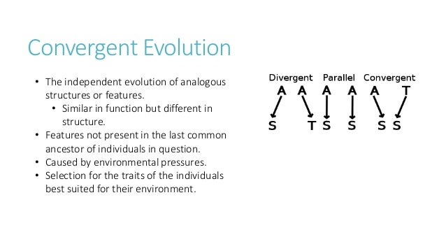 convergent evolution 3 essay Evolution is among the most substantiated concepts in science and is the unifying theory of biological science charles darwin co-originated, with alfred russel wallace, the theory of evolution by.