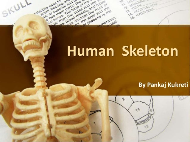 Human Skeleton By Pankaj Kukreti