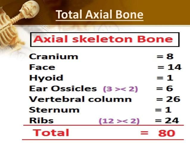 human skeleton bones, Skeleton
