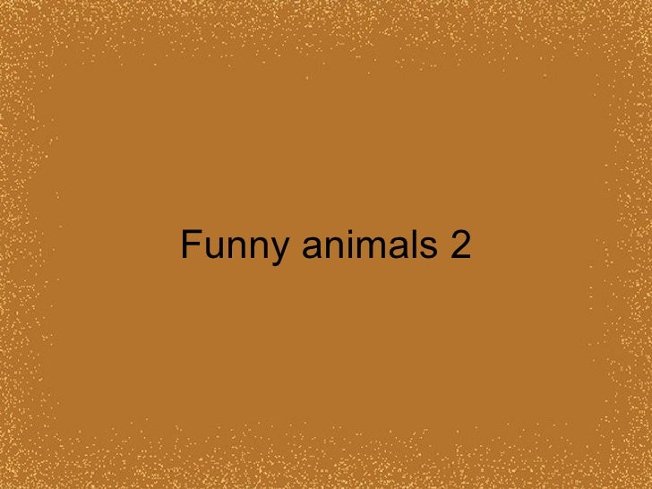 Funny animals 2