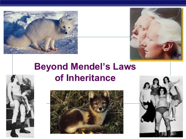 Beyond Mendel's Laws                 of InheritanceAP Biology                          2006-2007