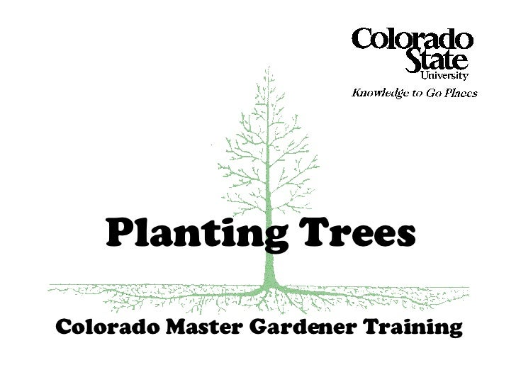 Colorado Master Gardener Training Planting Trees