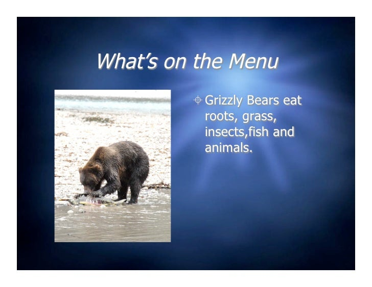 5 b grizzly bear for The fish 95 5