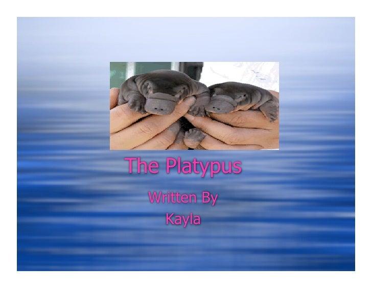 The Platypus   Written By     Kayla