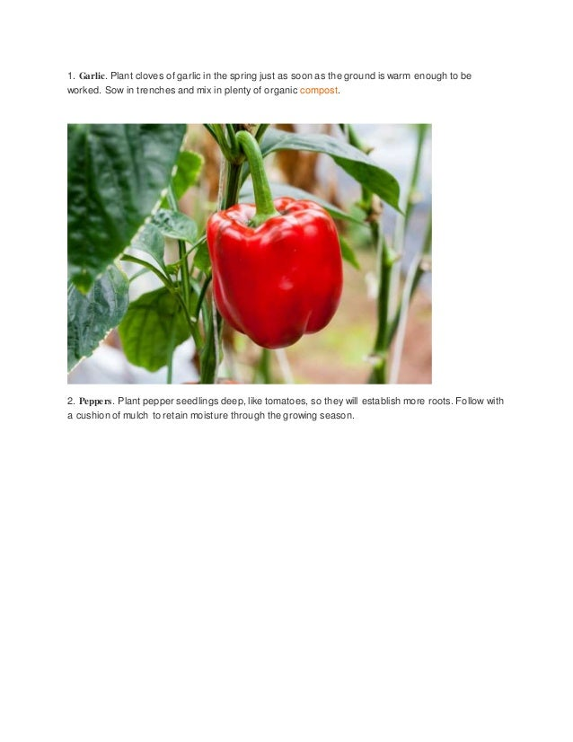 5 Best Vegetables To Grow Organically This Year