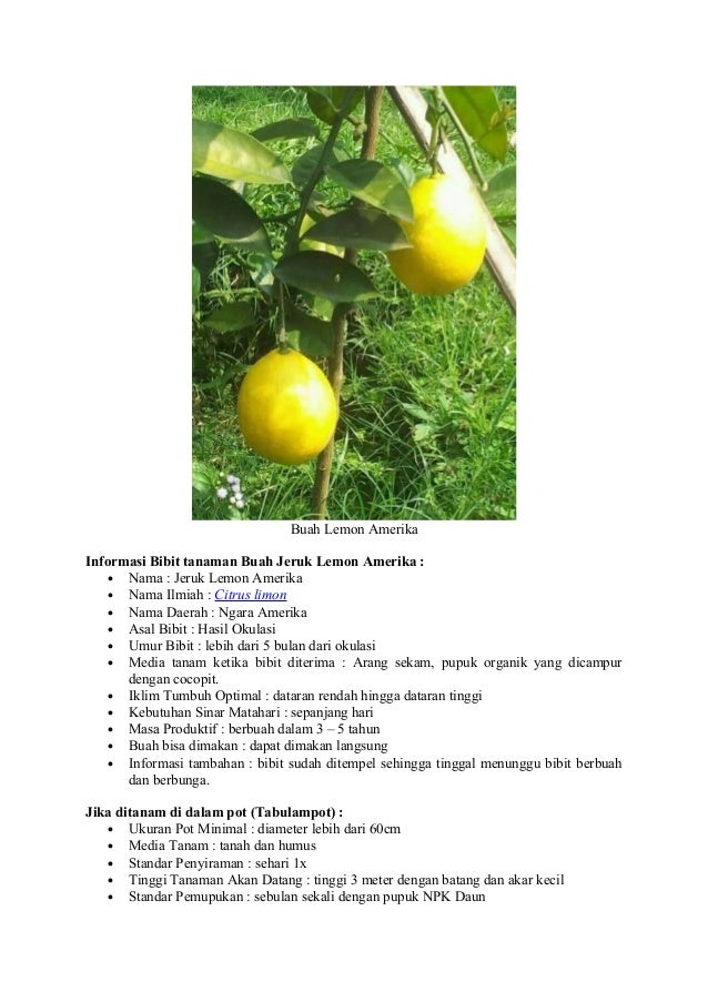 Deskripsi tentang jeruk lemon