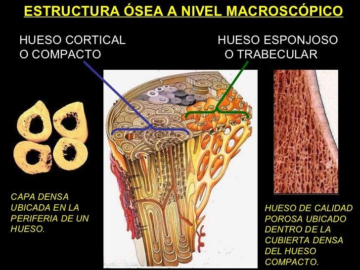 5 Biomecanica Del Hueso