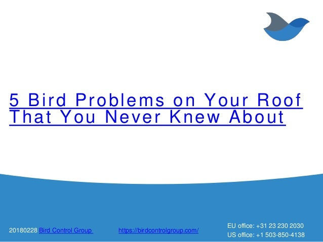 5 Bird Problems on Your Roof That You Never Knew About 20180228 Bird Control Group https://birdcontrolgroup.com/ EU office...