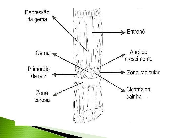 Ana Tipos De Raiz - Auto Electrical Wiring Diagram
