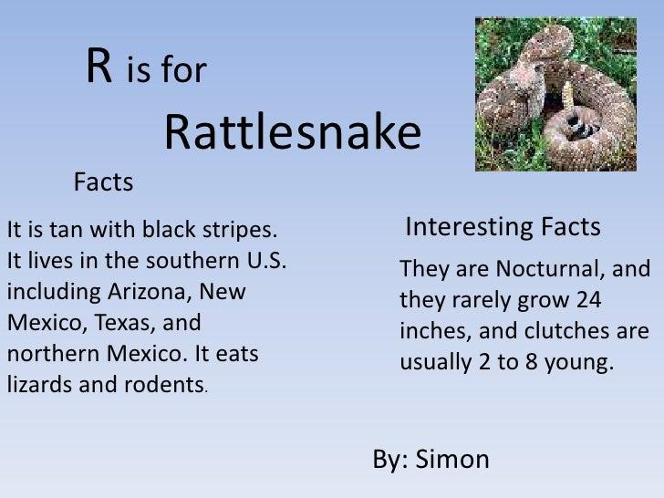 5 B Reptile Book