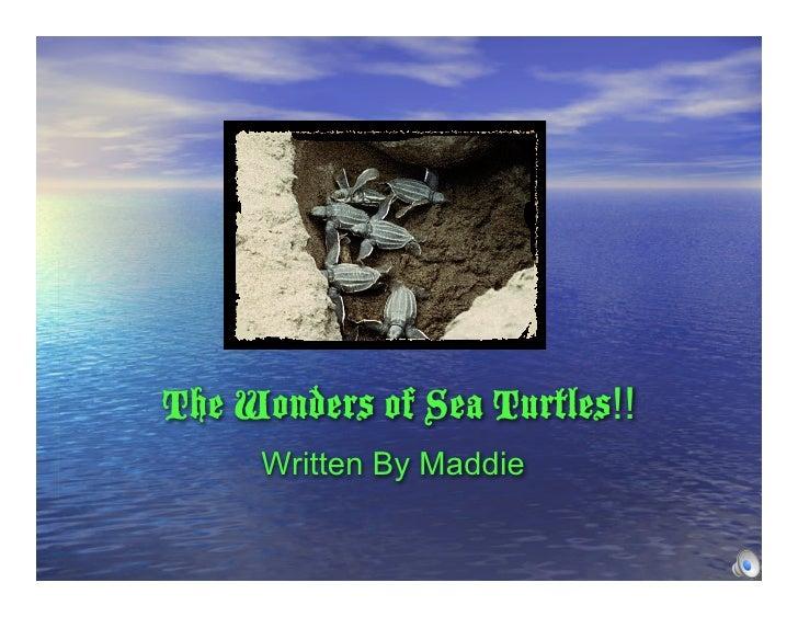 The Wonders of Sea Turtles!!      Written By Maddie