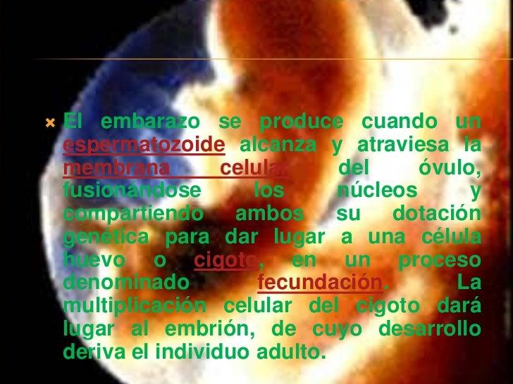   El embarazo se produce cuando un    espermatozoide alcanza y atraviesa la    membrana         celular    del     óvulo...