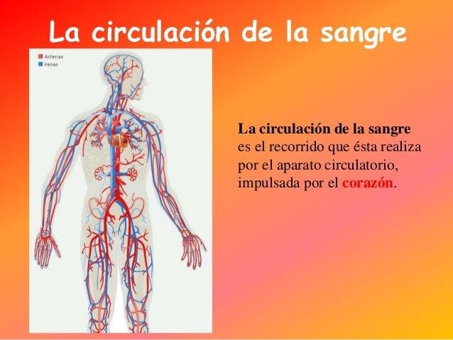 Circuito Que Realiza La Sangre : º cm el aparato circulatorio