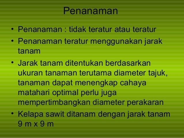 Penanaman kelapa sawit pdf