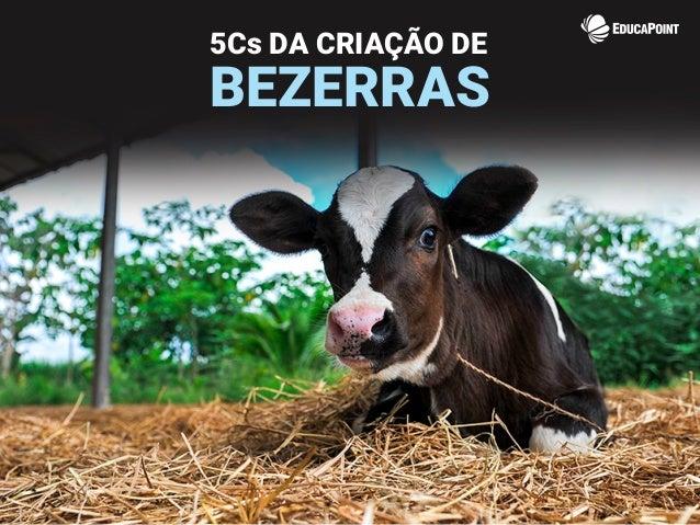 5Cs DA CRIAÇÃO DE BEZERRAS