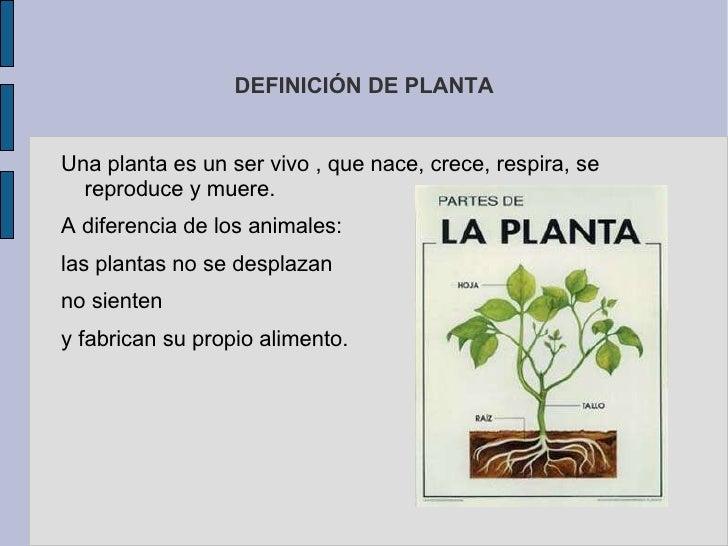 DEFINICIÓN DE PLANTA <ul>Una planta es un ser vivo , que nace, crece, respira, se reproduce y muere. A diferencia de los a...
