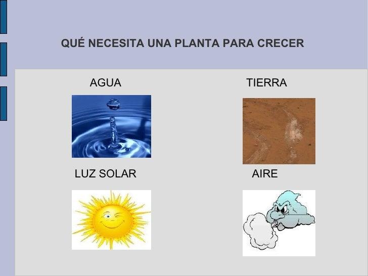 PARTES DE UNA PLANTA: EL TALLO <ul><li>Crece por en cima del suelo, sostiene las hojas, las flores y el fruto.