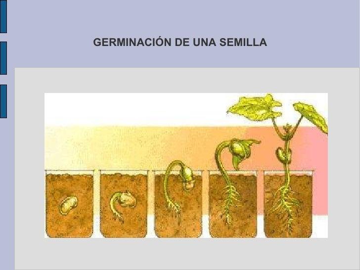 Transporta el agua y el alimento a las demás partes de la planta. </li></ul><ul>Existe tres tipos de tallo: <li>Herbáceo