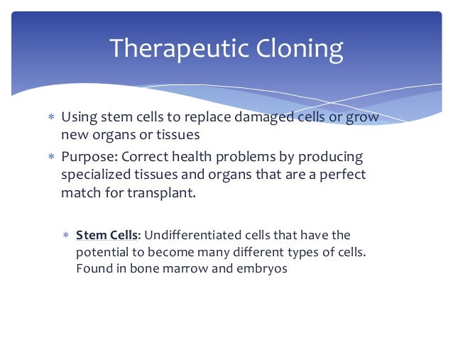 What are the Social advantages and disadvantages of cloning and transplanting cattle embryos?