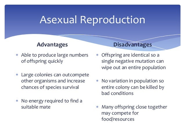 What causes asexual reproduction advantages