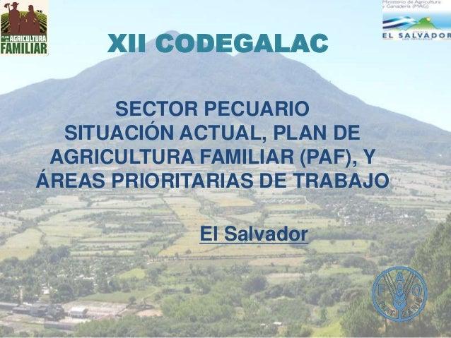 XII CODEGALAC SECTOR PECUARIO SITUACIÓN ACTUAL, PLAN DE AGRICULTURA FAMILIAR (PAF), Y ÁREAS PRIORITARIAS DE TRABAJO El Sal...