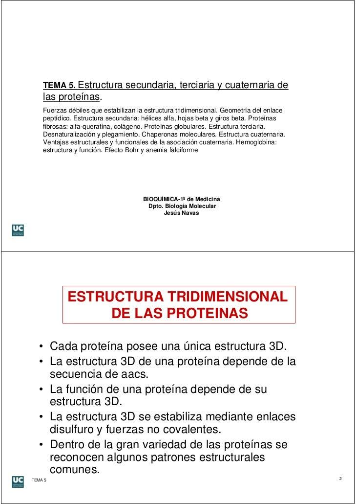 Estructura Secundaria Terciaria Y Cuaternaria