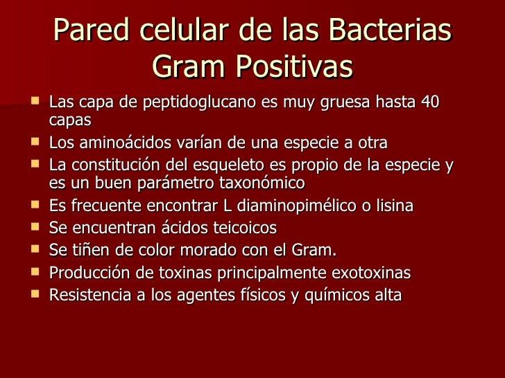 Pared celular de las Bacterias Gram Positivas <ul><li>Las capa de peptidoglucano es muy gruesa hasta 40 capas </li></ul><u...