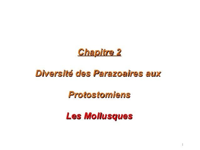1 Chapitre 2Chapitre 2 Diversité des Parazoaires auxDiversité des Parazoaires aux ProtostomiensProtostomiens Les Mollusque...