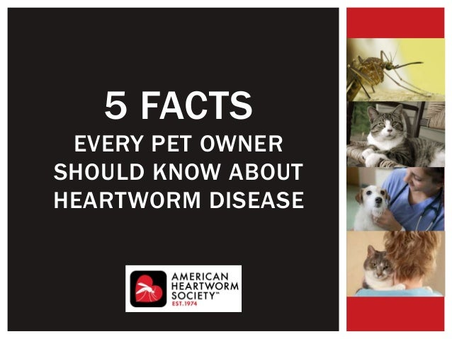 5 FACTS EVERY PET OWNER SHOULD KNOW ABOUT HEARTWORM DISEASE