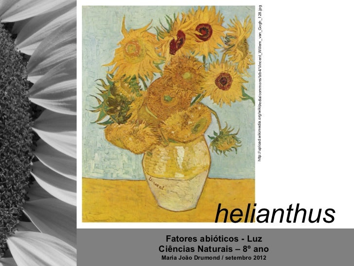 http://upload.wikimedia.org/wikipedia/commons/b/b4/Vincent_Willem_van_Gogh_128.jpg                 helianthus Fatores abió...