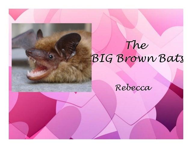 The BIG Brown Bats Rebecca