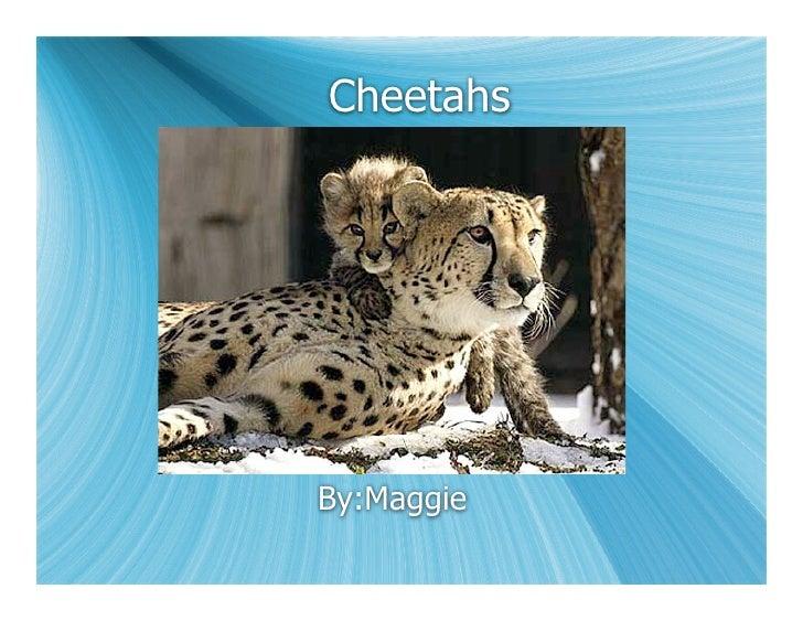 Cheetahs     By:Maggie
