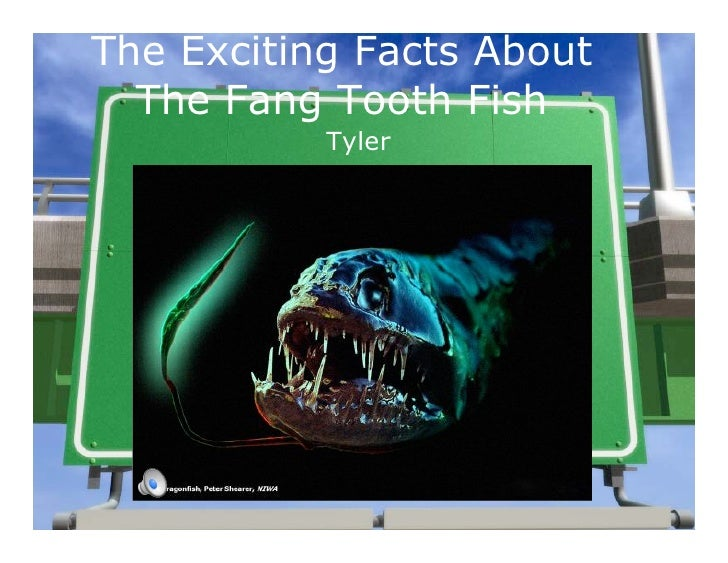 The Exciting Facts About   The Fang Tooth Fish            Tyler