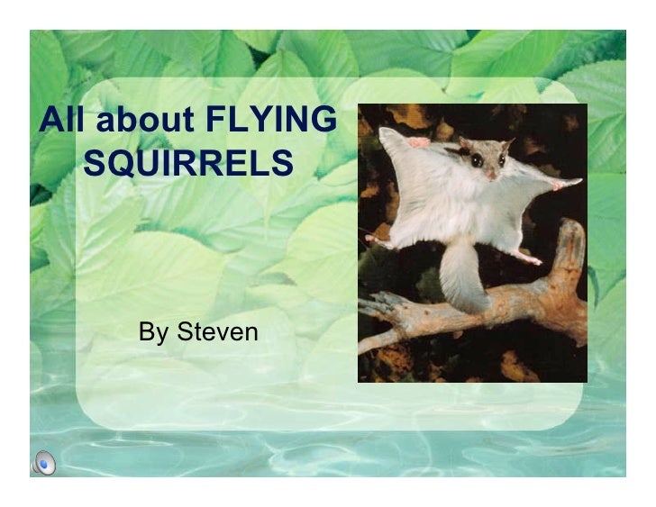 All about FLYING    SQUIRRELS         By Steven