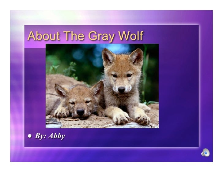 About The Gray Wolf         By: Abby 