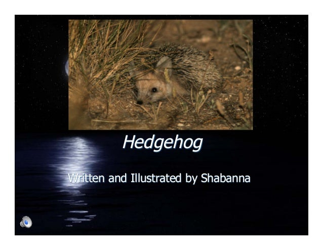 Hedgehog Written and Illustrated by Shabanna