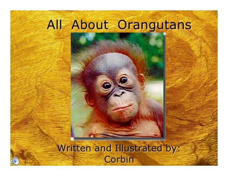 All About Orangutans      Written and Illustrated by:            Corbin
