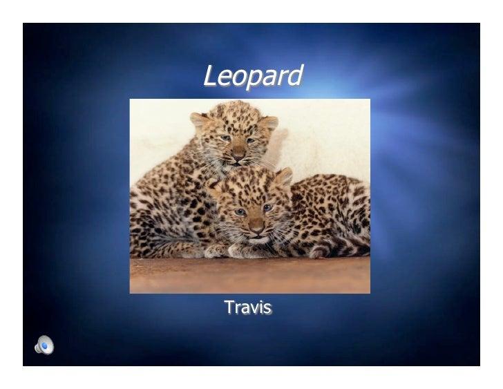 Leopard      Travis