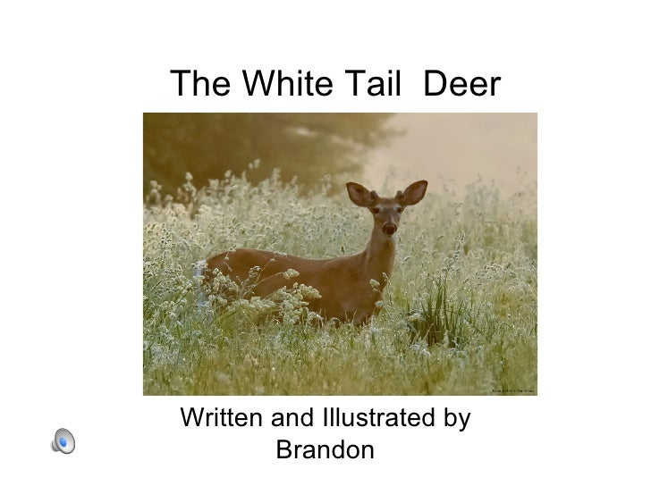 The White Tail Deer     Written and Illustrated by         Brandon