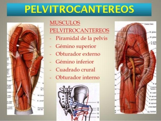 Las revocaciones sobre sklerozirovanie de las venas en los pies