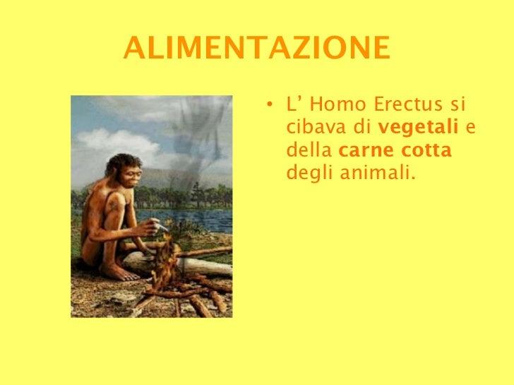 <ul><li>L' Homo Erectus si cibava di  vegetali  e della  carne cotta  degli animali. </li></ul>ALIMENTAZIONE