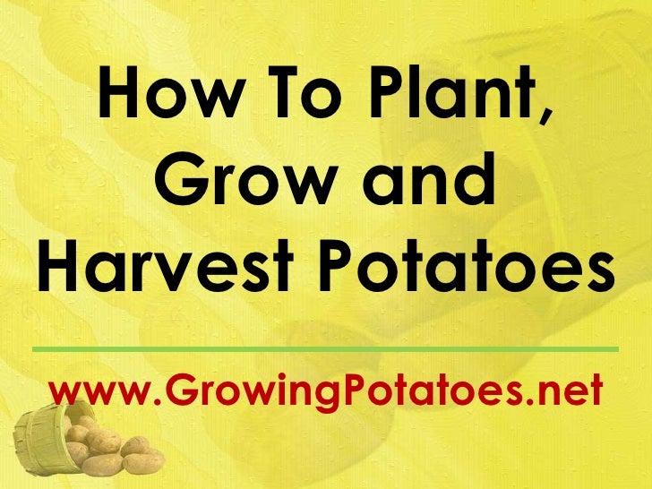 How To Plant,   Grow andHarvest Potatoeswww.GrowingPotatoes.net