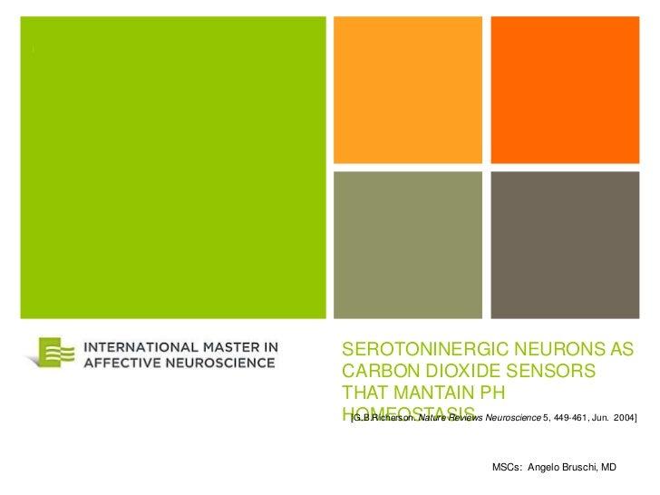 +    SEROTONINERGIC NEURONS AS    CARBON DIOXIDE SENSORS    THAT MANTAIN PH    HOMEOSTASIS Neuroscience 5, 449-461, Jun. 2...