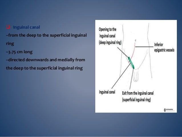  CONTENTES spermatic cord (M ) Ilioinguinal nerve Genitofemoral nerve Round ligament of ut ( F)
