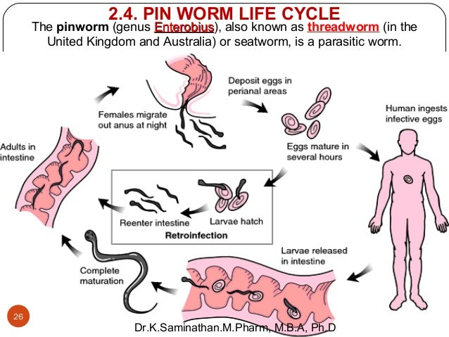 How do you get pinworms?
